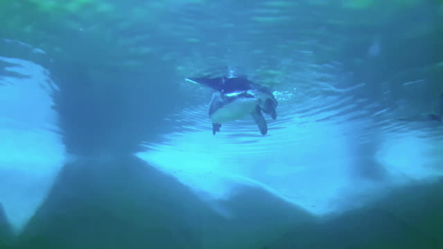 ペンギン - 小さい点の映像素材/bロール
