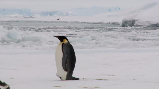 penguin watching colleagues - penguin stock videos and b-roll footage