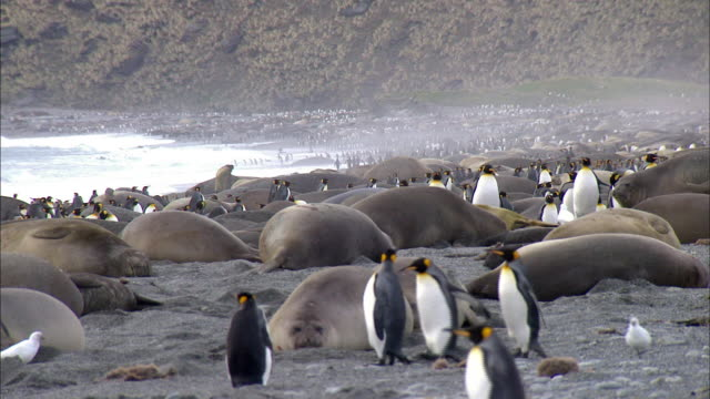 penguins and seals - seals stock videos and b-roll footage