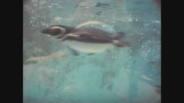 penguins at the zoo - animal mouth stock videos & royalty-free footage