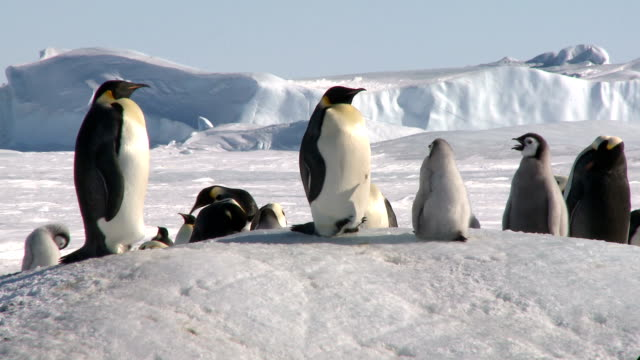penguins chilling on snowhill - penguin stock videos and b-roll footage