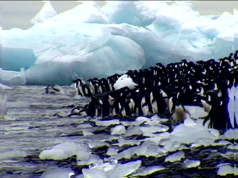 penguins diving into the icy sea - antarctica research stock videos & royalty-free footage
