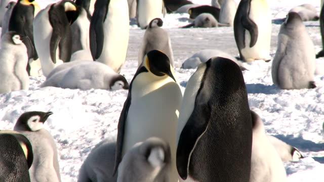 penguins flirting