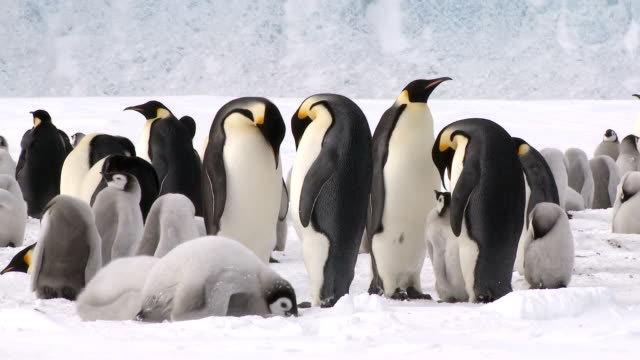 penguins hanging heads down - penguin stock videos & royalty-free footage