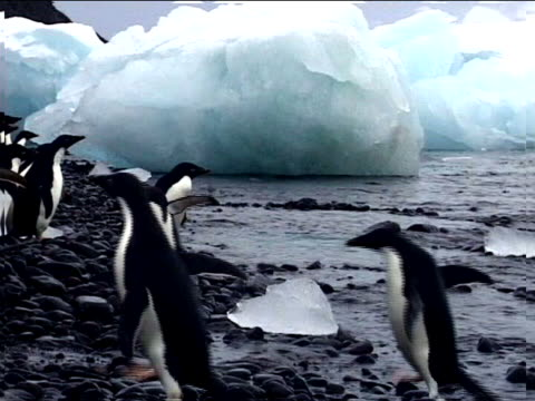 stockvideo's en b-roll-footage met penguins on an icy shore - documentairebeeld