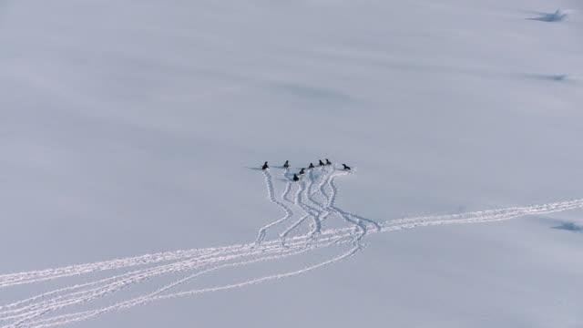 aerial penguins running on snow / antarctic peninsula, antarctica - antarctica aerial stock videos & royalty-free footage