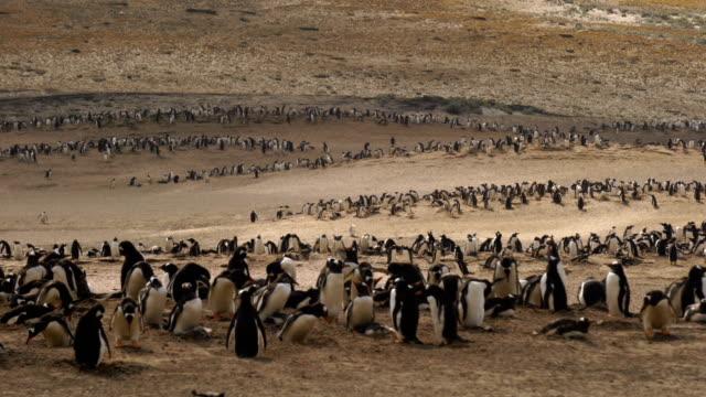vídeos y material grabado en eventos de stock de pingüinos de pie sobre una roca - small group of animals