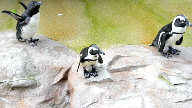 penguins standing on rock in zoo - zoo stock videos & royalty-free footage