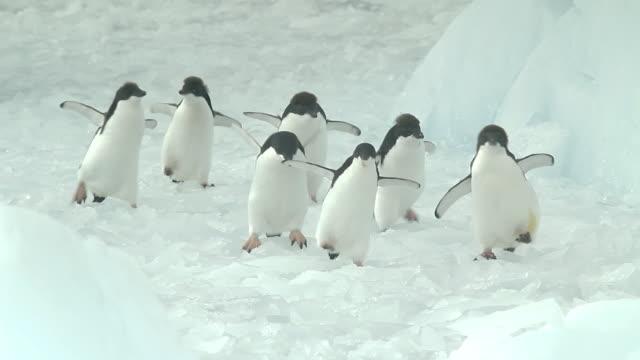 vídeos y material grabado en eventos de stock de penguins walk on moving ice in antarctica - pingüino