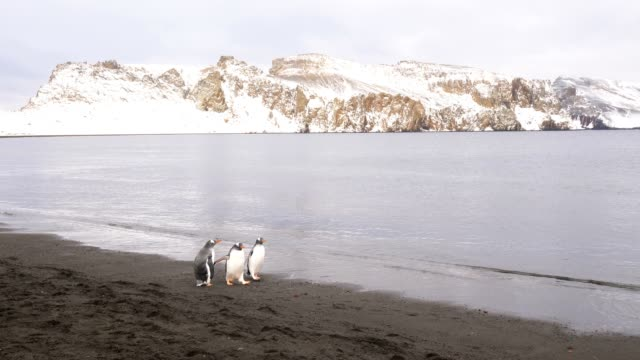 3 penguins walking on the beach