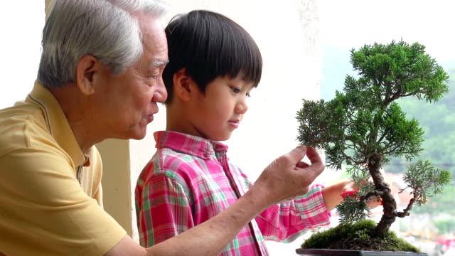 Penjing Grandfather and Grandson Bansai