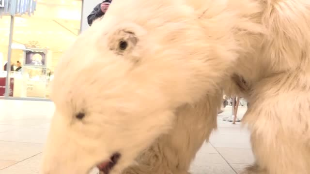 vídeos y material grabado en eventos de stock de penny the polar bear visits leeds to help yorkshire water promote their campaign to prevent unwanted household disasters from frozen and burst pipes... - clima polar