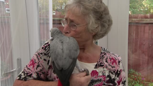 pension cold calling to be banned; pat bottomley with grey parrot - grey colour stock videos & royalty-free footage