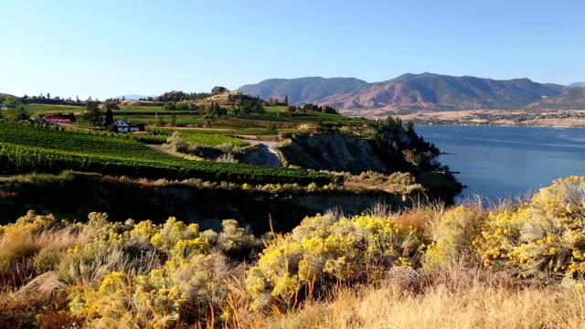 Penticton Naramata Okanagan Valley Vineyard