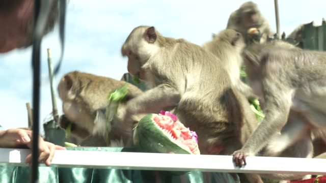 People and Monkeys take part in the The Monkey Buffet Festival At Phra Prang Sam Yod temple in Lopburi Thailand It is a unique Festival held for the...