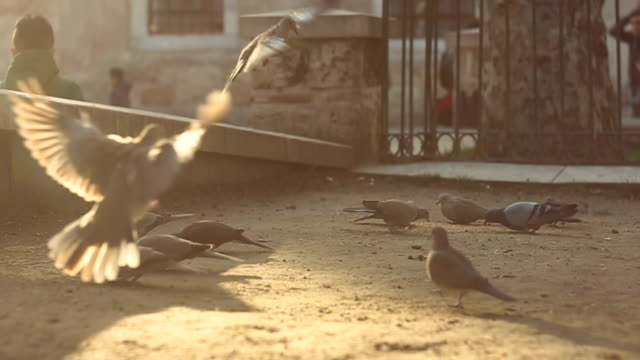 People and pigeons