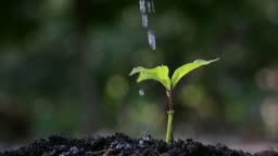 People are planting and watering plants in their hands. There are trees, ideas for preserving nature and the environment.