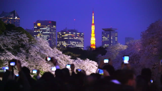 People are taking picture of Tokyo Night Skyscrapers behind the Cherry blossoms of the Chidorigafuchi Moat of The Imperial Palace.Tokyo Tower is illuminated among the skyscrapers behind Cherry blossoms, and also many Smart phones shine in the darkness.
