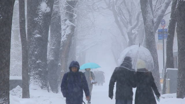 TU People are walking down the Fifth Avenue Sidewalk which is surrounded by snowy trees line.