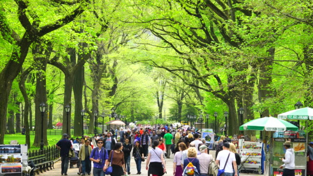 tu people are walking down the mall at central park, which is surrounded by rows of fresh green trees.tree's seeds are falling down and blowing away in the mall. - market stall stock videos & royalty-free footage