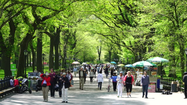 TU People are walking down The Mall at Central Park, which is surrounded by rows of fresh green trees.