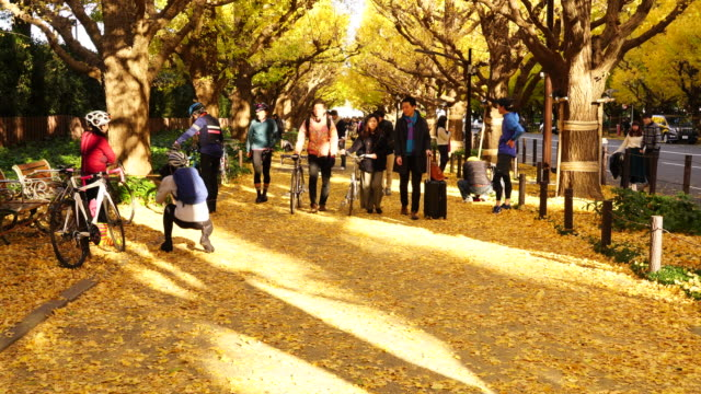 people are walking through the ginkgo tree avenue under the rows of glowing autumn leaves in jingu gaien, chhiyoda ward, tokyo japan on november 19 2017. the avenue is surrounded by line of autumn leaves tree, and wrapped up by innumerable falling leaves. - ginkgobaum stock-videos und b-roll-filmmaterial
