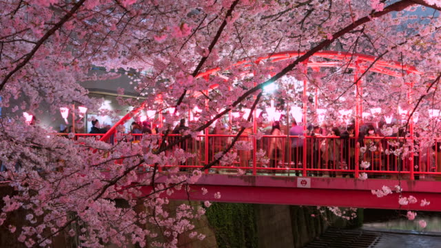 People are watching the illuminated rows of cherry blossoms trees (Sakura) on the Red Nakanohashi Bridge of Meguro River the night at Nakameguro Tokyo.Cherry blossoms and river are illuminated by paper lanterns and lights.