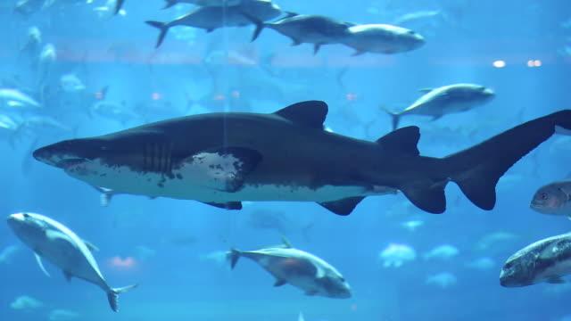 people at aquarium - dubai mall - aquarium stock videos & royalty-free footage