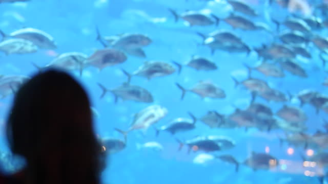 people at aquarium - dubai mall - aquarium stock videos & royalty-free footage