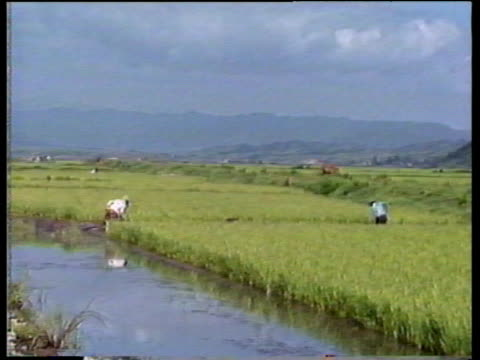 People at work in paddy fields and irrigation channels North Korea; 1988
