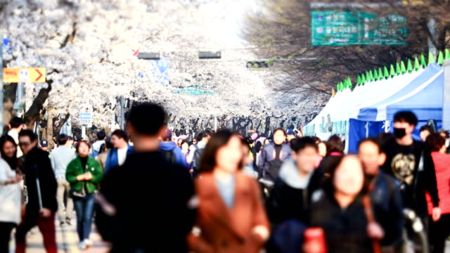 People at Yeouido Cherry Blossom Festival in Seoul