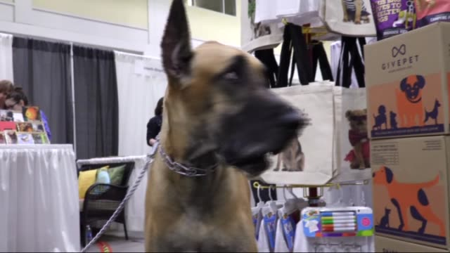 vidéos et rushes de people attend the p3 progressive pet products trade show which is a 2 day event being held from 24th august to the 25th august 2016 at the navy pier... - exclusivité