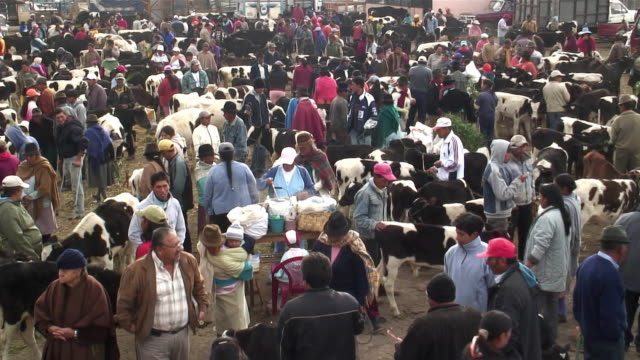 WS HA People buying and selling cattle at market / Saquisili, Ecuador