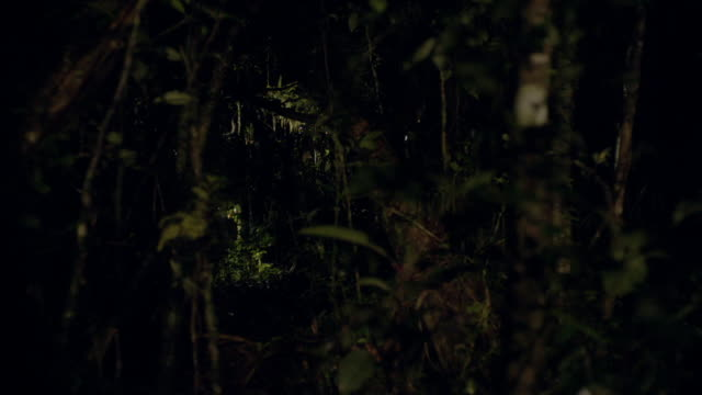 people carry cage through forest at night - releasing stock videos & royalty-free footage