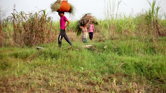 people carrying animal fodder in row - developing countries stock videos & royalty-free footage
