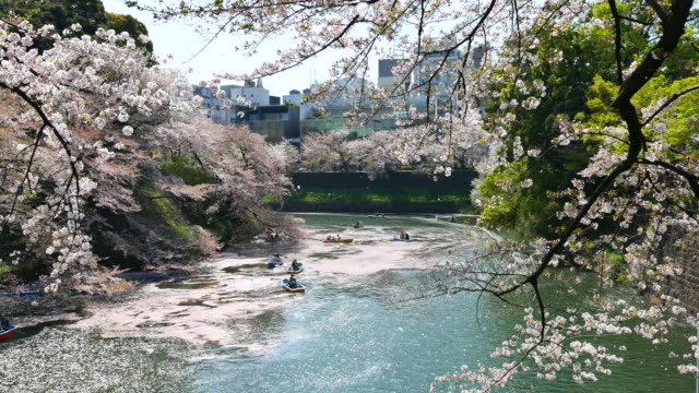 people celebrating the cherry blossom at japan - canal stock videos & royalty-free footage