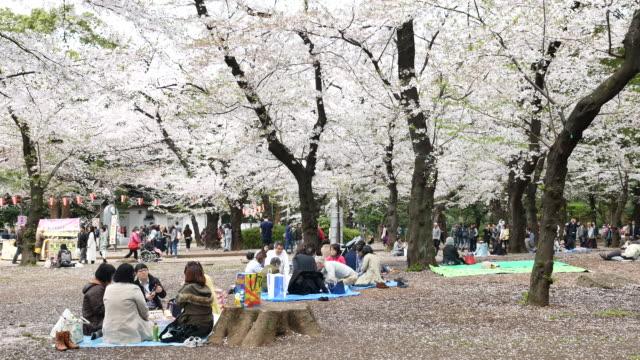Mensen vieren van de kersenbloesem in Tokio