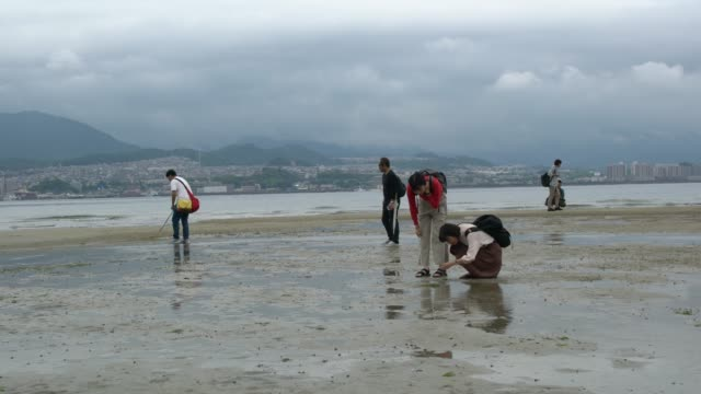people collecting sea shells around itsukushima shrine iconic floating torii gate at low tide, japan - bassa marea video stock e b–roll