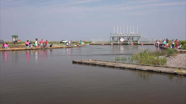 people crabbing in marsh from dock with string and chicken in marsh at sabine national wildlife refuge in louisiana - カニ捕り点の映像素材/bロール