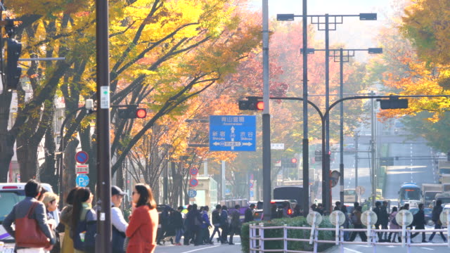 people cross and cars go through the omotesando (frontal approach), which is surrounded by autumn leaves trees along the street during the morning commute at harajuku district shibuya tokyo japan on november, 29 2017. - shrine stock videos and b-roll footage