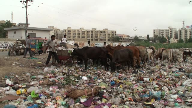 vídeos de stock e filmes b-roll de people cross pedestrian bridge in karachi, cows eating off a garbage dump in the residential area of karachi, homeless people sleep on footpaths in... - paquistão