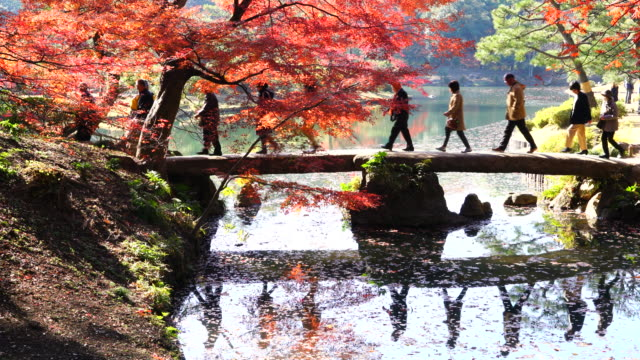people cross the togetsukyo bridge over the pond, which is surrounded by autumn leaves trees in rikugien garden (traditional japanese garden) bunkyo-ku tokyo on december 03 2017. people and autumn trees reflect to pond. - 秋点の映像素材/bロール