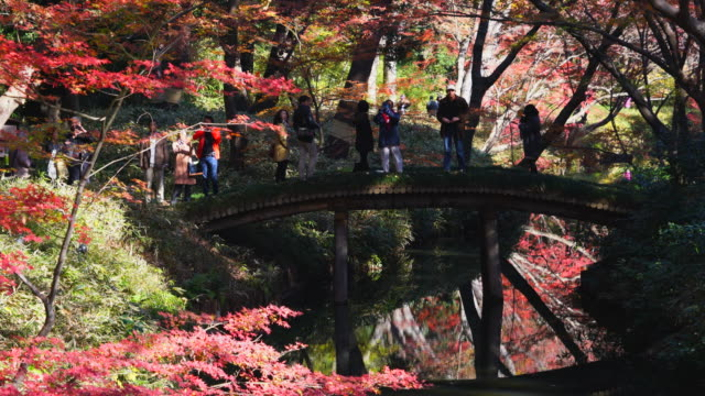 People cross the Yamakagebashi Bridge over the pond, which is surrounded by autumn leaves trees in Rikugien Garden (Traditional Japanese Garden) Bunkyo-ku Tokyo on December 03 2017. People and autumn trees reflect to pond.