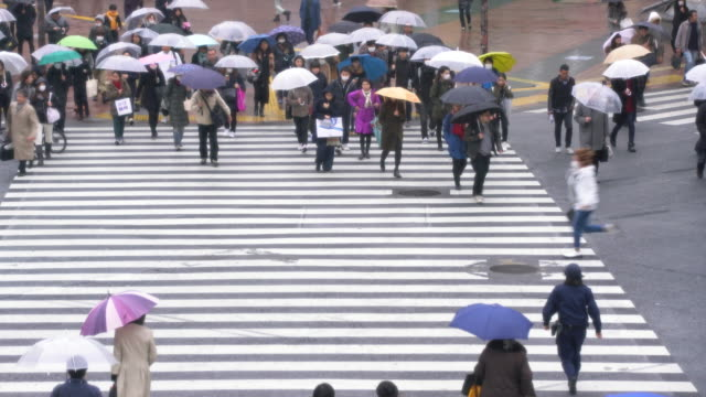 vídeos y material grabado en eventos de stock de ws tl people crossing the street in the rain, tokyo japan - paso de cebra