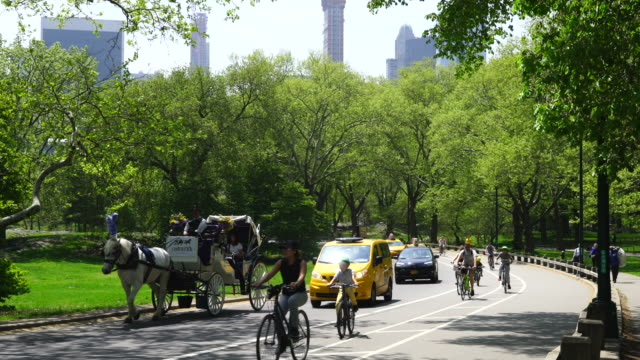 vídeos de stock e filmes b-roll de people, cyclist, cars and horse carriage run on the park road, which are surrounded by rows of fresh green at central park new york usa on may 09 2018. - parque público