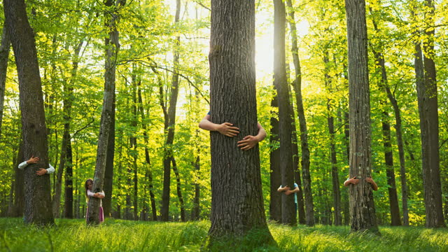 slo mo people embracing tree trunks in the forest - anonymous activist network stock videos & royalty-free footage
