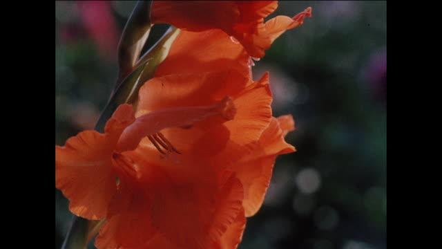 MONTAGE People enjoy beautiful English gardens / UK