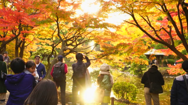 vídeos y material grabado en eventos de stock de people enjoy viewing and photographing among the colorful autumn leaves trees along the glowing unkei pond by the sunset in hibiya park at hibiya, chiyoda tokyo japan on november 25 2017. - parque ciudad