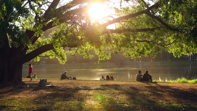 people enjoying a sunny day at ibirapuera park - environmental conservation stock videos & royalty-free footage