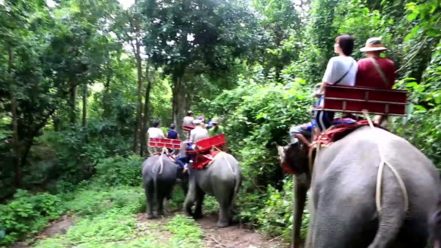 people enjoying elephant trekking in rainforest - tourism stock videos & royalty-free footage